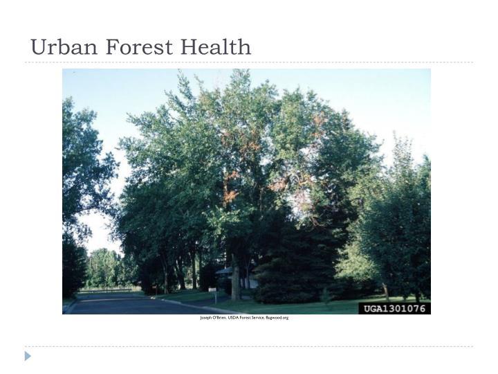 Urban Forest Health