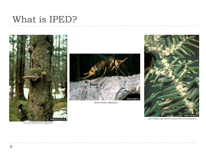 What is IPED?