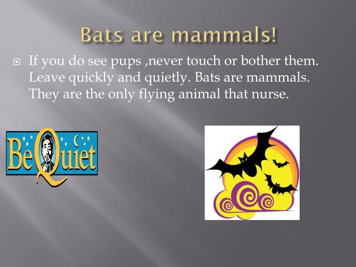 Bats are mammals!