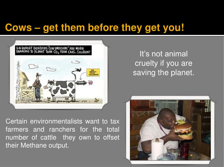 Cows – get them before they get you!