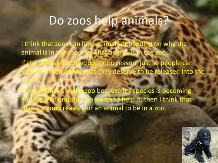 animal should not be kept in In my opinion, animals should not be kept in zoos because animals should be in there natural habitat, they like to be free and some zoos are really cruel to the animals that is why animals should not be kept in zoos.