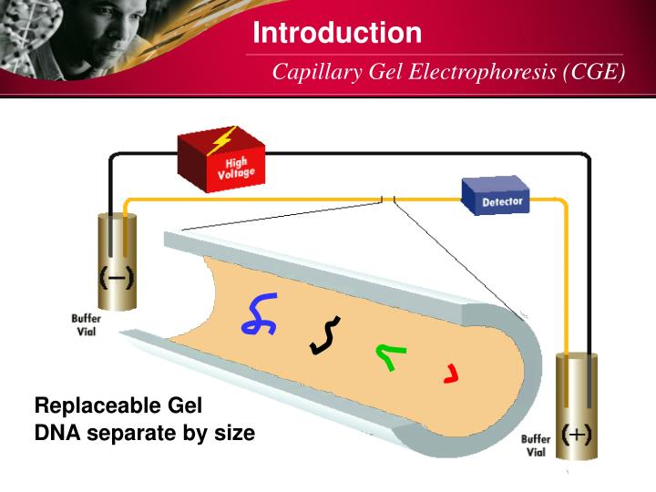 Replaceable Gel