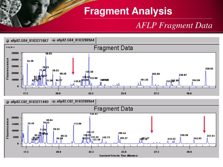 Fragment Analysis