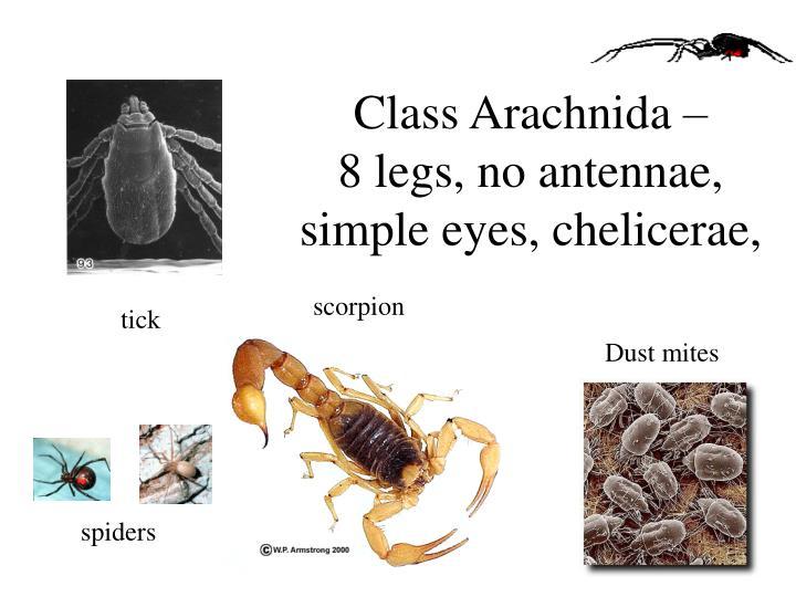 Class Arachnida –