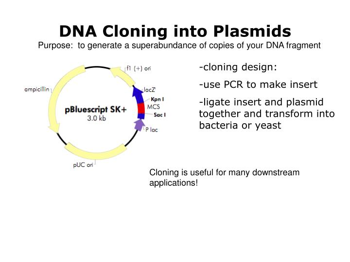 DNA Cloning into Plasmids