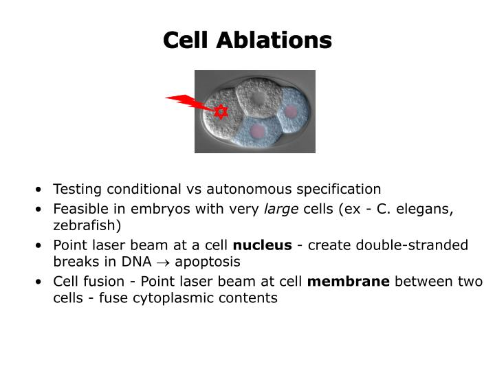 Cell Ablations
