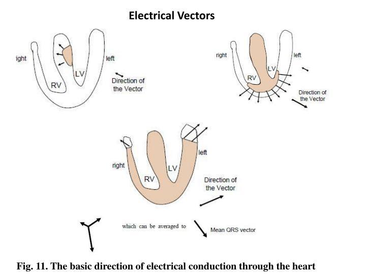 Electrical Vectors