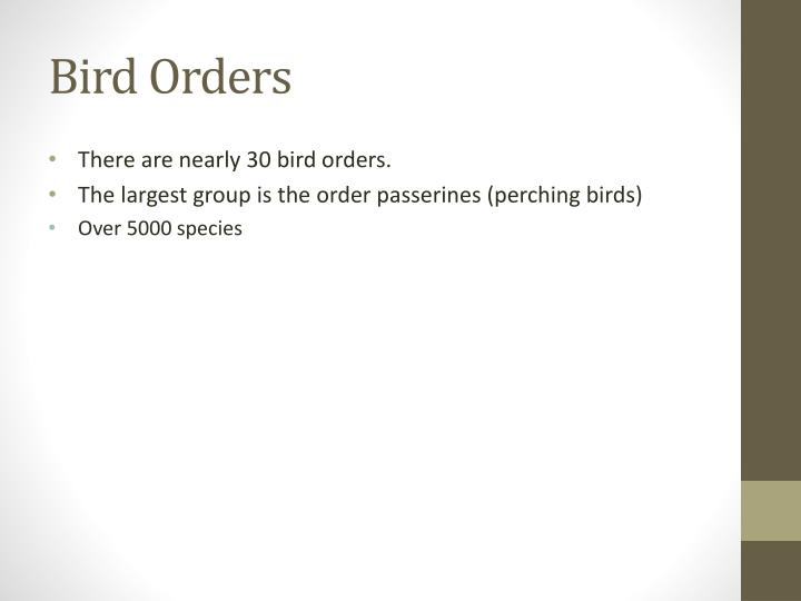 Bird Orders