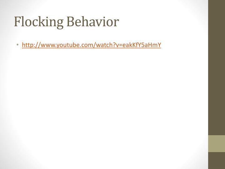 Flocking Behavior