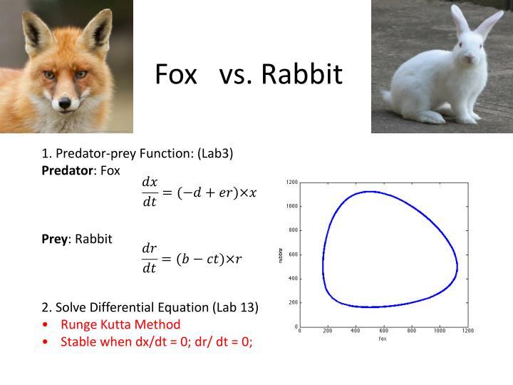 Fox   vs. Rabbit