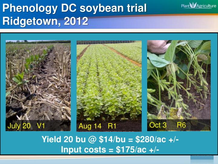 Phenology DC soybean trial