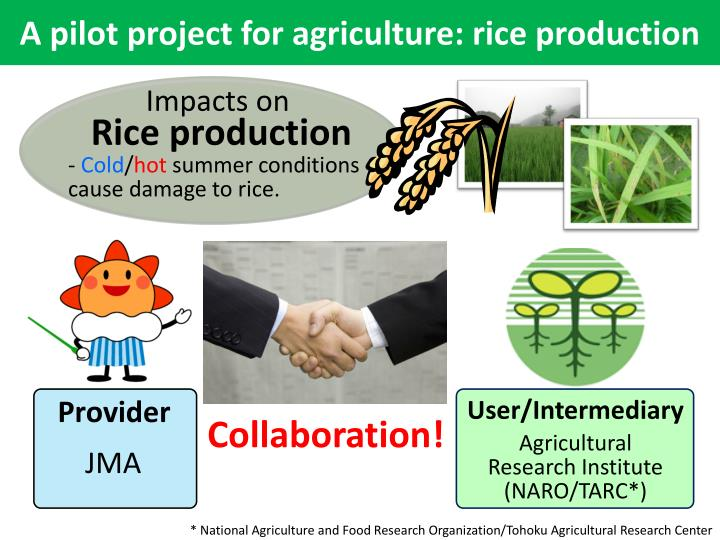 A pilot project for agriculture: rice production