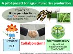 a pilot project for agriculture rice production