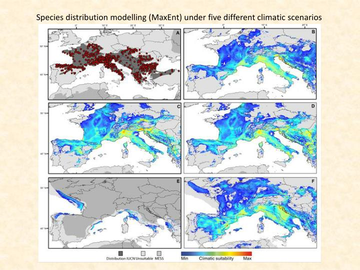 Species distribution modelling (MaxEnt) under five different climatic scenarios
