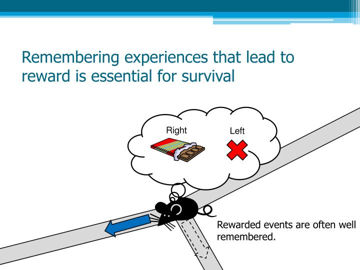 Remembering experiences that lead to reward is essential for survival