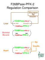 f26bpase pfk 2 regulation comparison