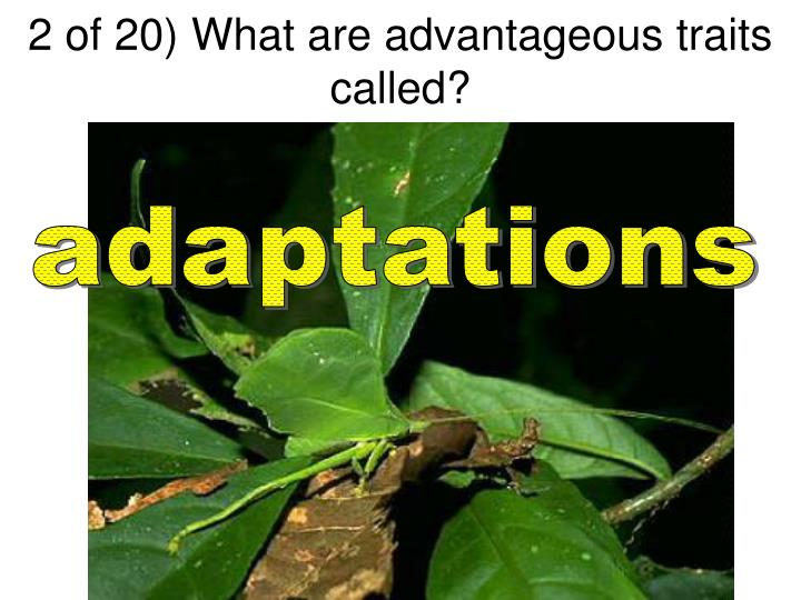 2 of 20) What are advantageous traits called?