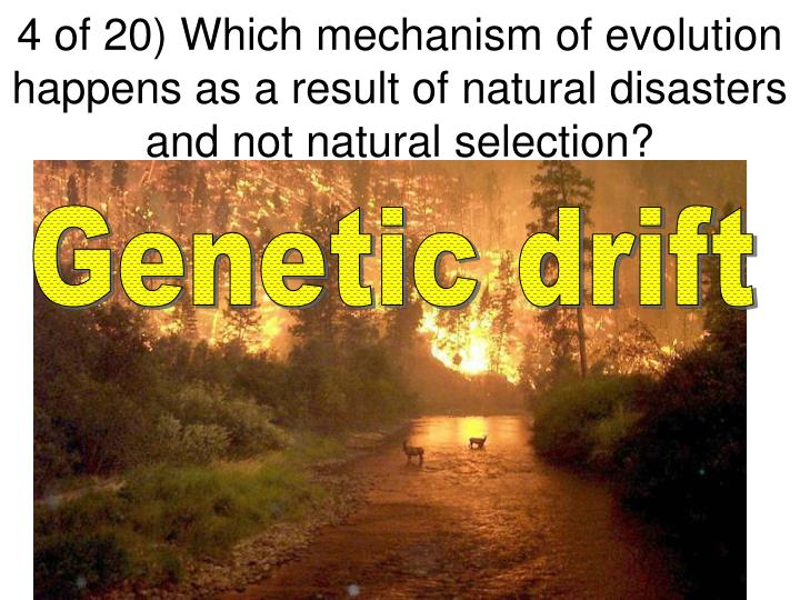 4 of 20) Which mechanism of evolution happens as a result of natural disasters and not natural selection?