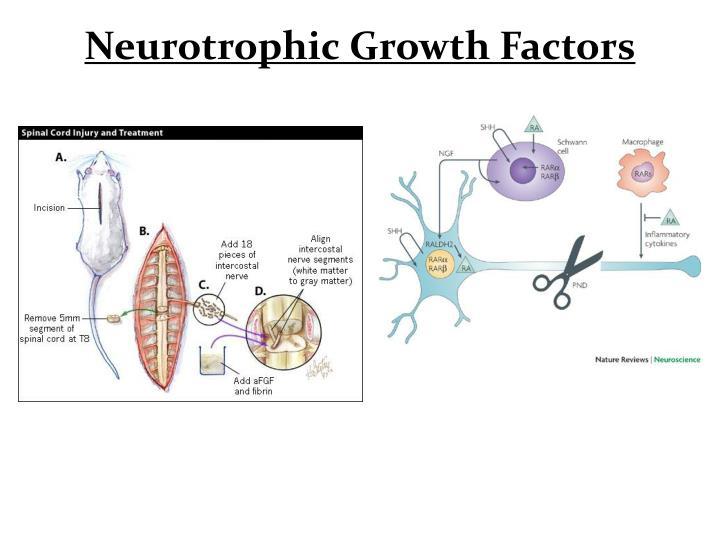 Neurotrophic