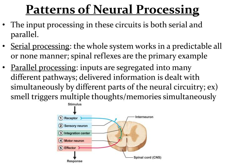 Patterns of Neural Processing