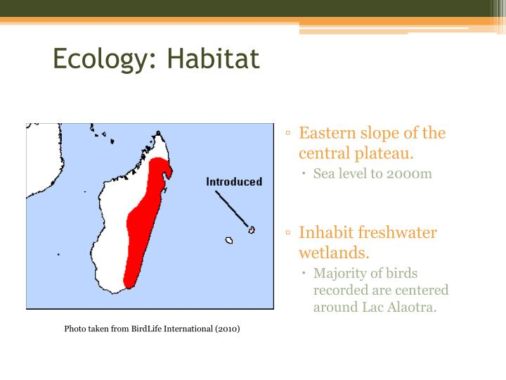 Ecology: Habitat