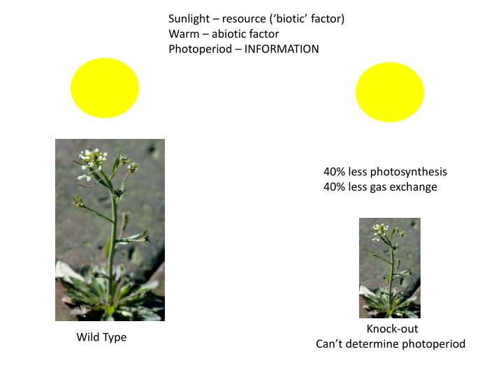 Sunlight – resource ('biotic' factor)