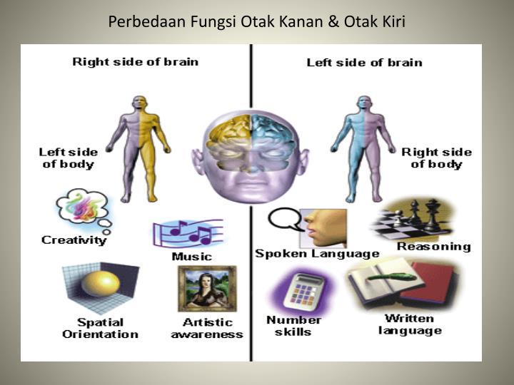 Perbedaan Fungsi Otak Kanan & Otak Kiri