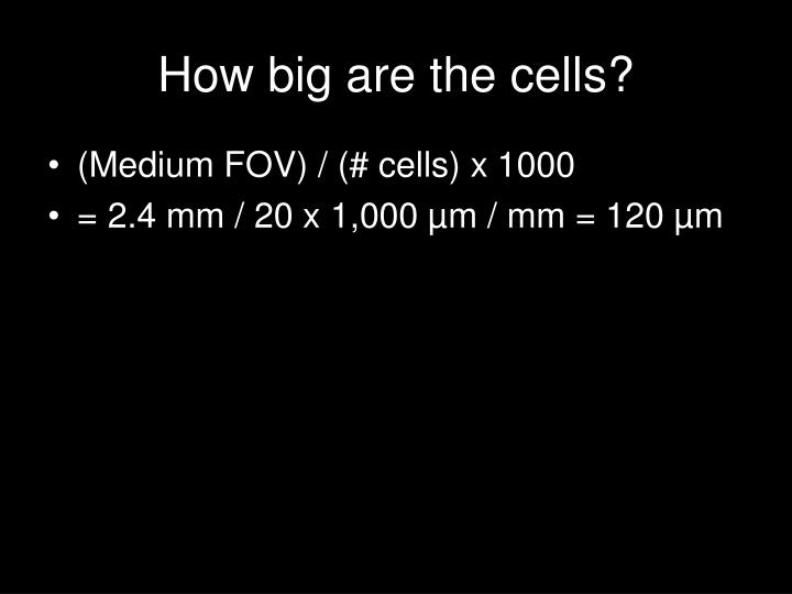 How big are the cells