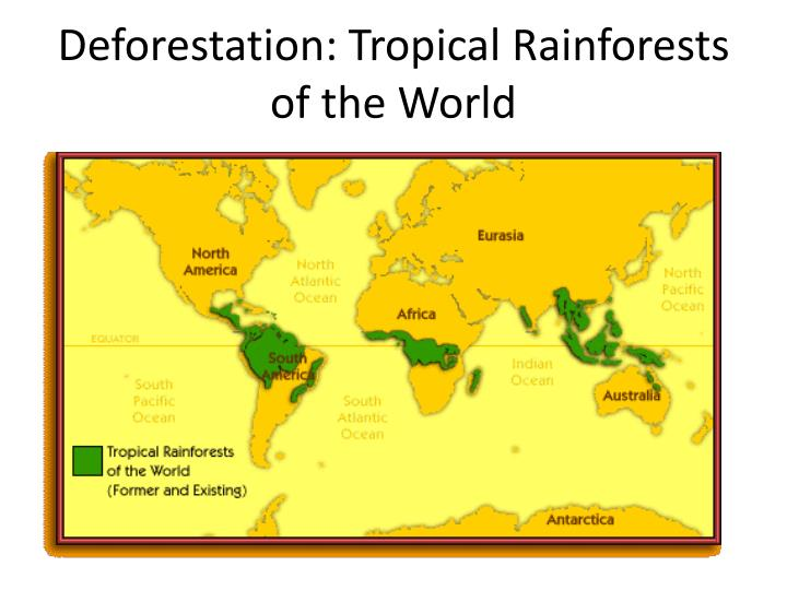 the importance of tropical rainforests and the effects of destroying them The rainforests provide us with many benefits, which can be divided into environmental and human benefits in fact, 40 percent of medicines that are prescribed have tropical origins.