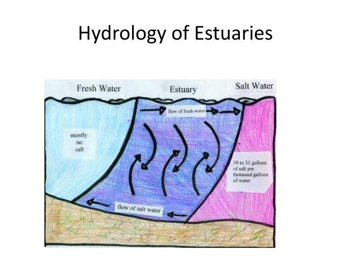 Hydrology of Estuaries