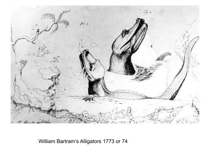 William Bartram's Alligators 1773 or 74