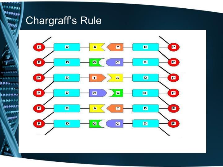 Chargraff's Rule