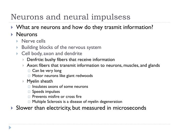 Neurons and neural