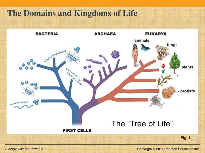 PPT - Introduction to Biology BIOS 1010 7A PowerPoint ...