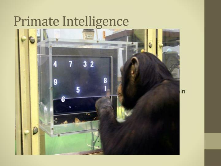 Primate Intelligence