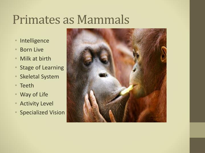 Primates as Mammals