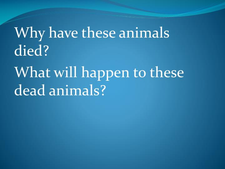 Why have these animals died?