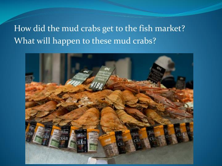How did the mud crabs get to the fish market?