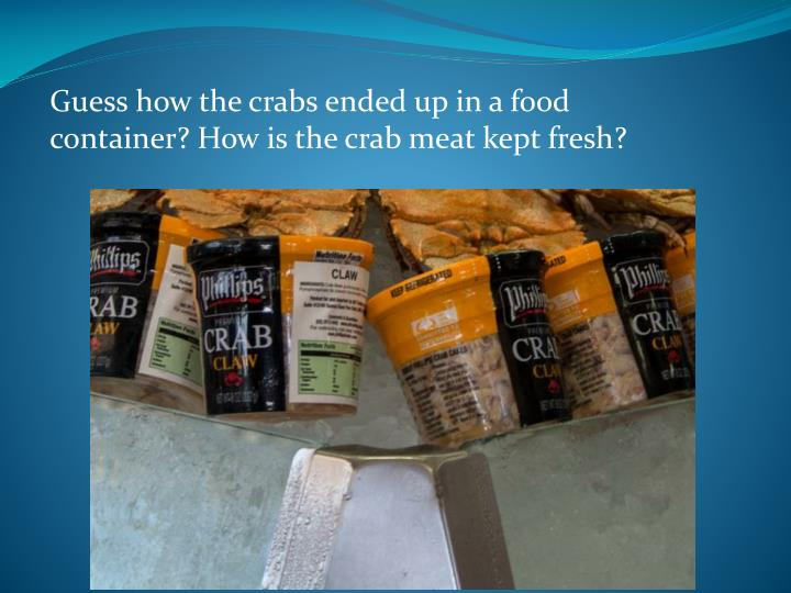 Guess how the crabs ended up in a food container? How is the crab meat kept fresh?