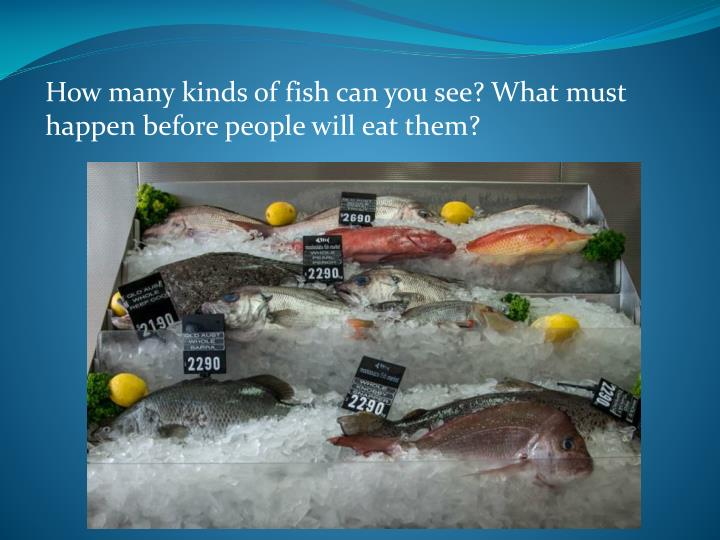 How many kinds of fish can you see? What must happen before people will eat them?