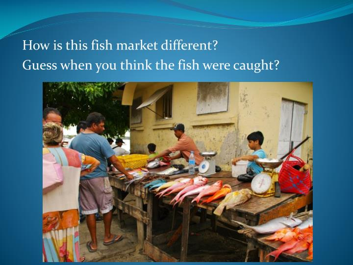 How is this fish market different?
