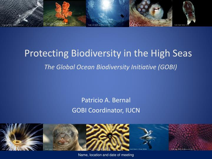 Protecting biodiversity in the high seas the global ocean biodiversity initiative gobi