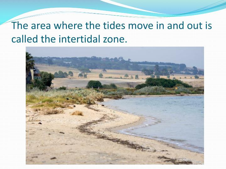 The area where the tides move in and out is called the intertidal zone