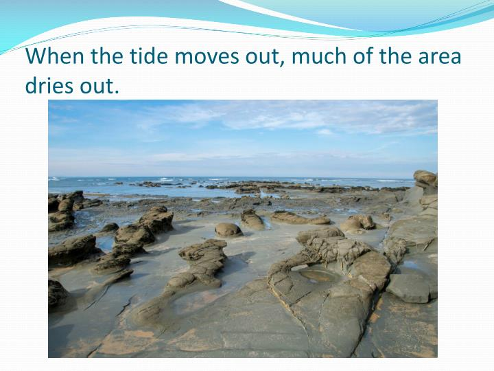 When the tide moves out, much of the area dries out.