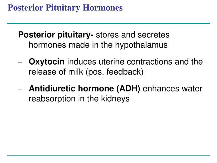Posterior Pituitary Hormones