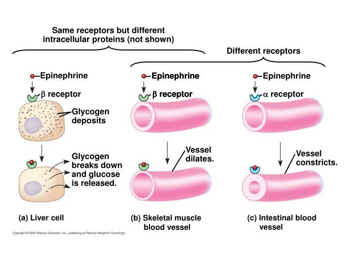 Same receptors but different