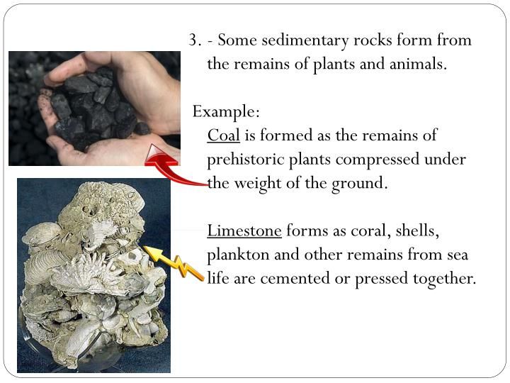 - Some sedimentary rocks form from the remains of plants and animals.