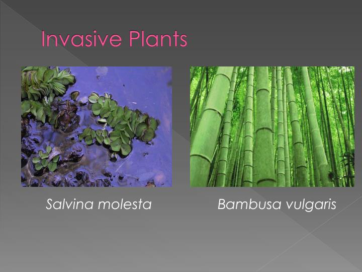 Invasive Plants