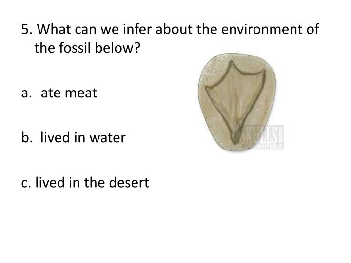 5. What can we infer about the environment of the fossil below?