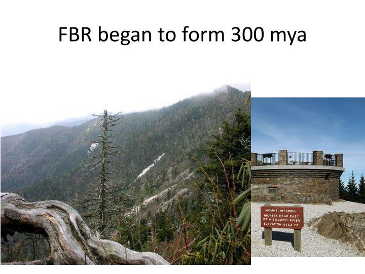 FBR began to form 300